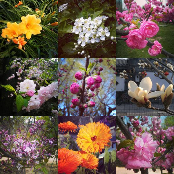 insta-flowers