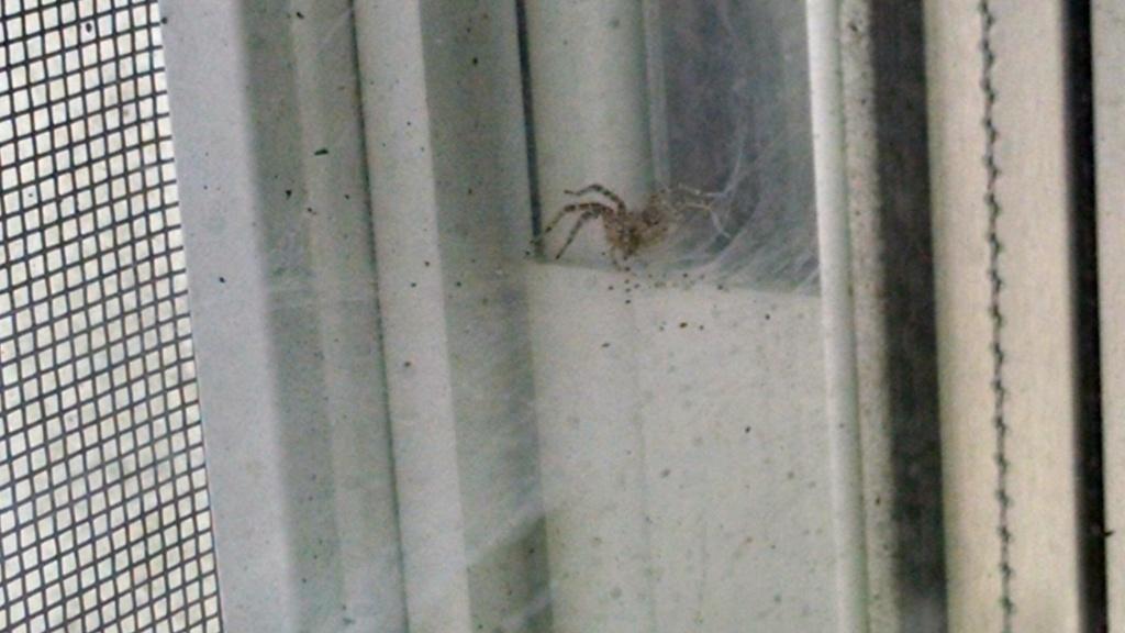 window-spider